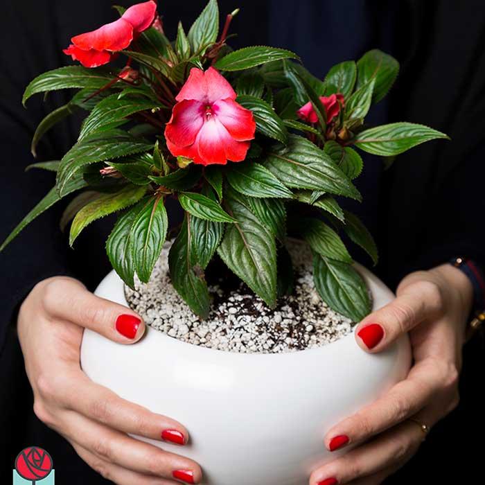 گلدان های زینتی